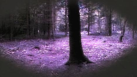 Dunkley Wood, as featured in Level 2 of Series 4 (1990).