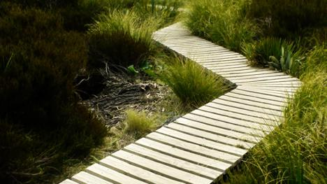 Winding pathway. Based on Crooked Nature Path by Shirley Serban for FreeImages.